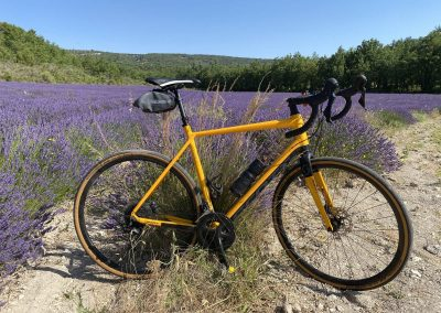 Cycling among the scented lavender fields that can be found everywhere from late June to mid-July