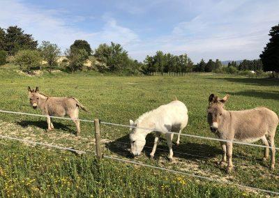 Nos trois ânes miniatures ont également un morceau du terrain