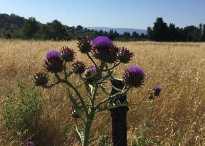 Fleurs sauvages sur le terrain